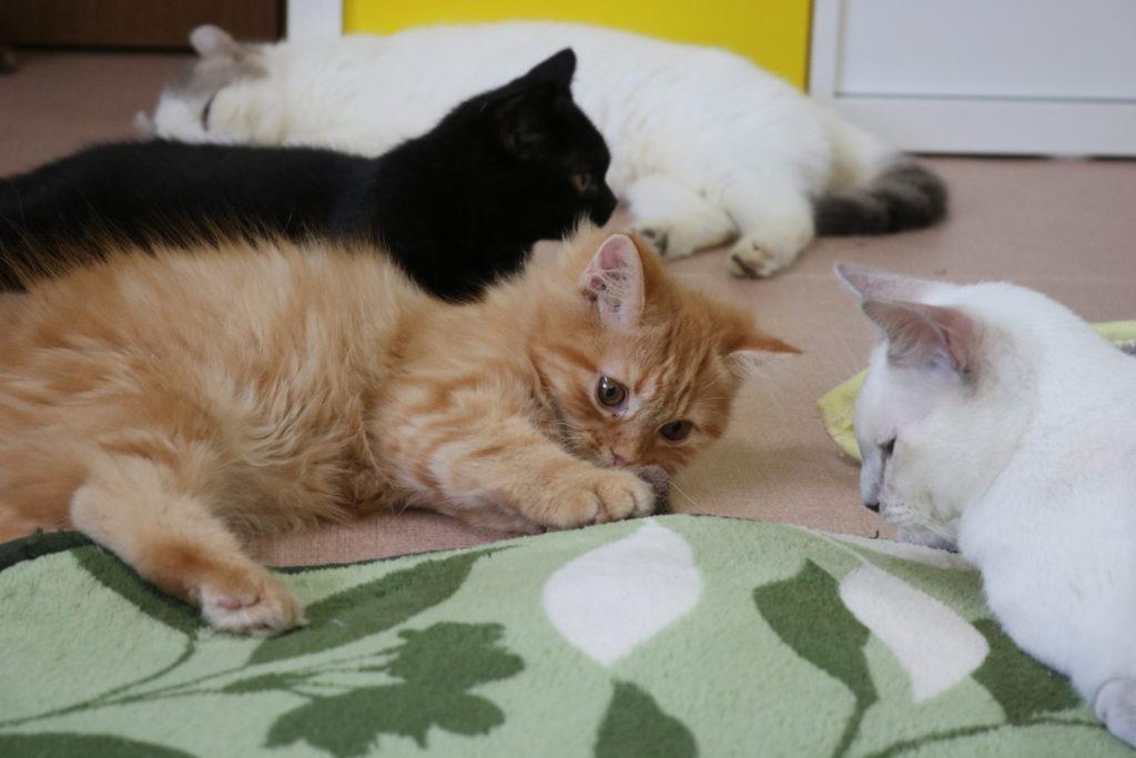 カーペットの下をゴソゴソする猫