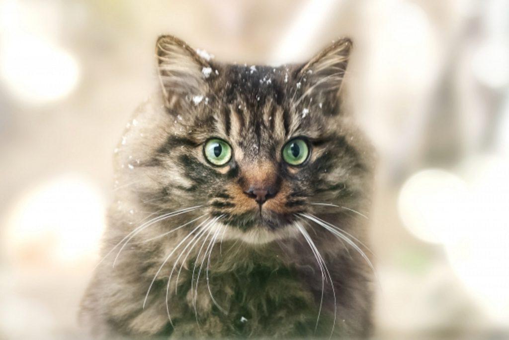 雪が頭に積もった猫
