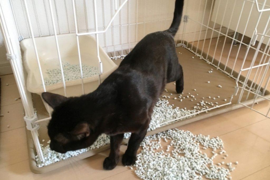 トイレの砂を散らかす猫
