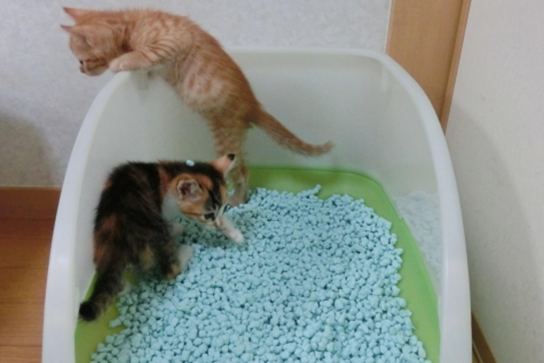 トイレで遊ぶ猫