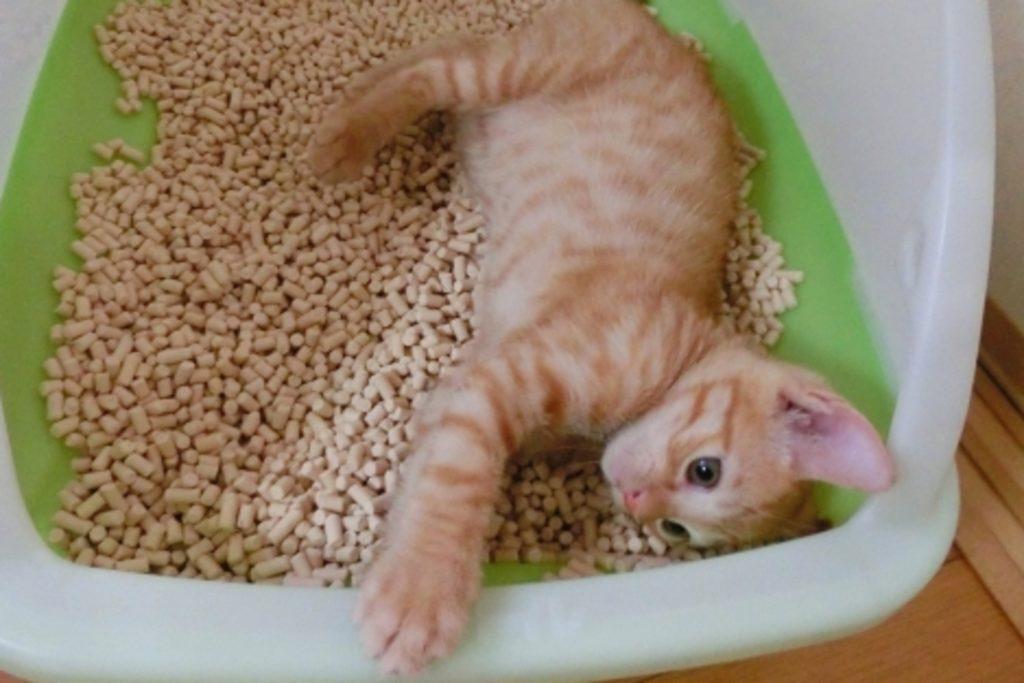 猫用トイレと猫