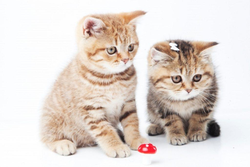 おとなしく座る2匹の子猫