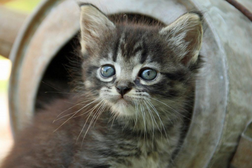 寂しそうな瞳の子猫