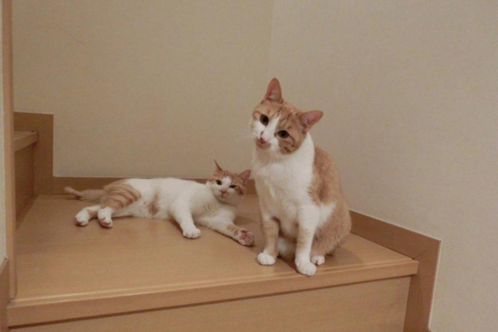 階段で首をかしげる猫