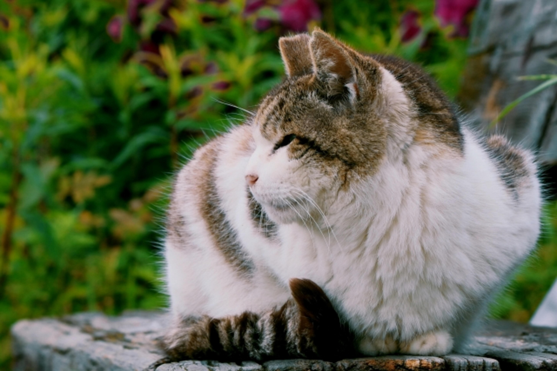 塀に座る老猫