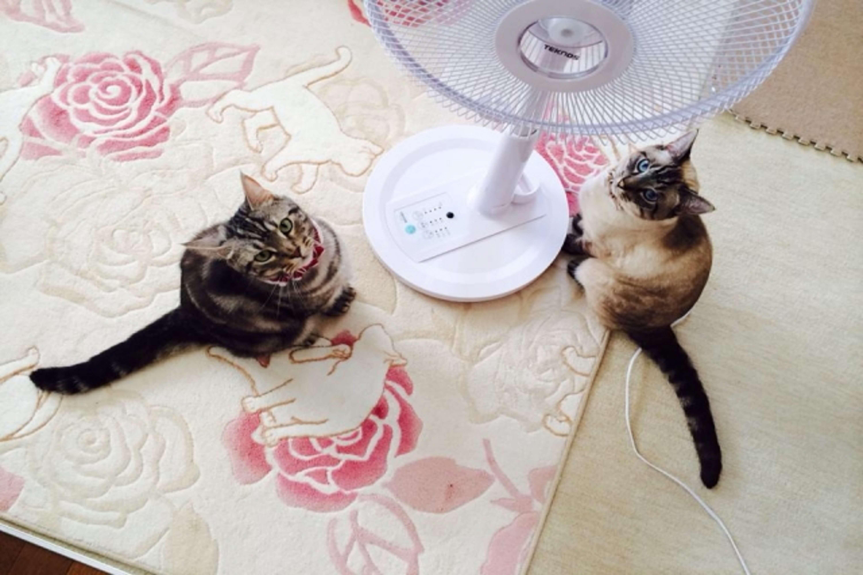 扇風機を見る猫