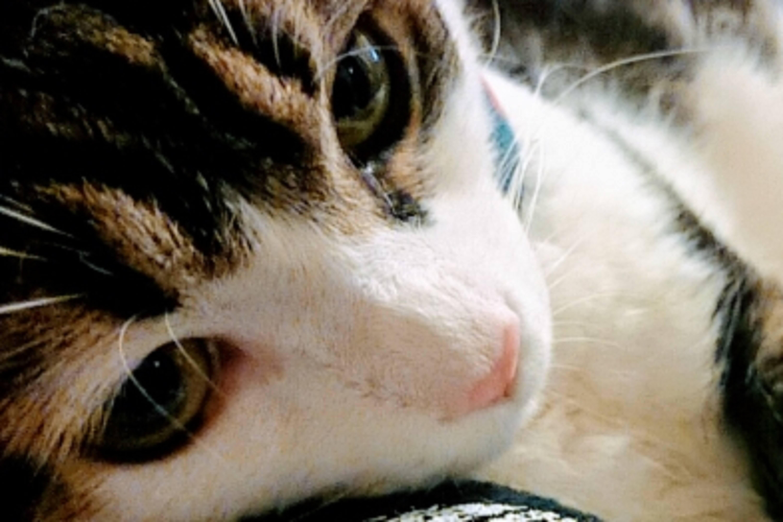 猫_目_アレルギー
