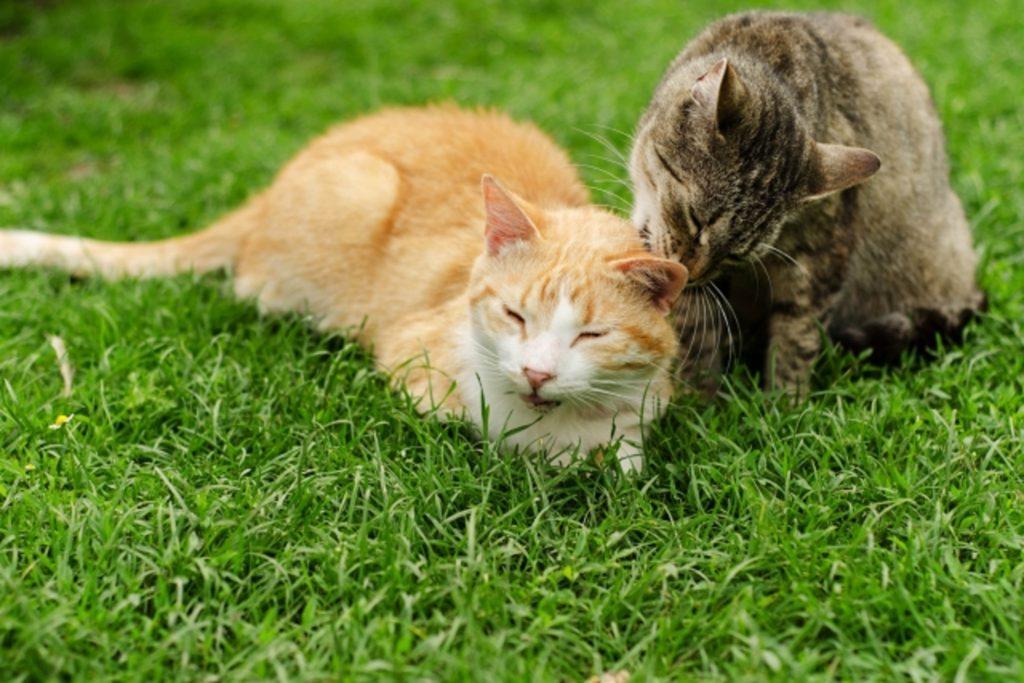 外で座っているオス猫とメス猫