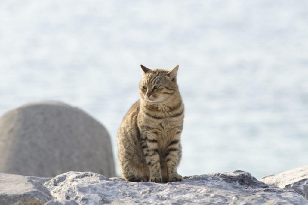 岩の上に座った猫