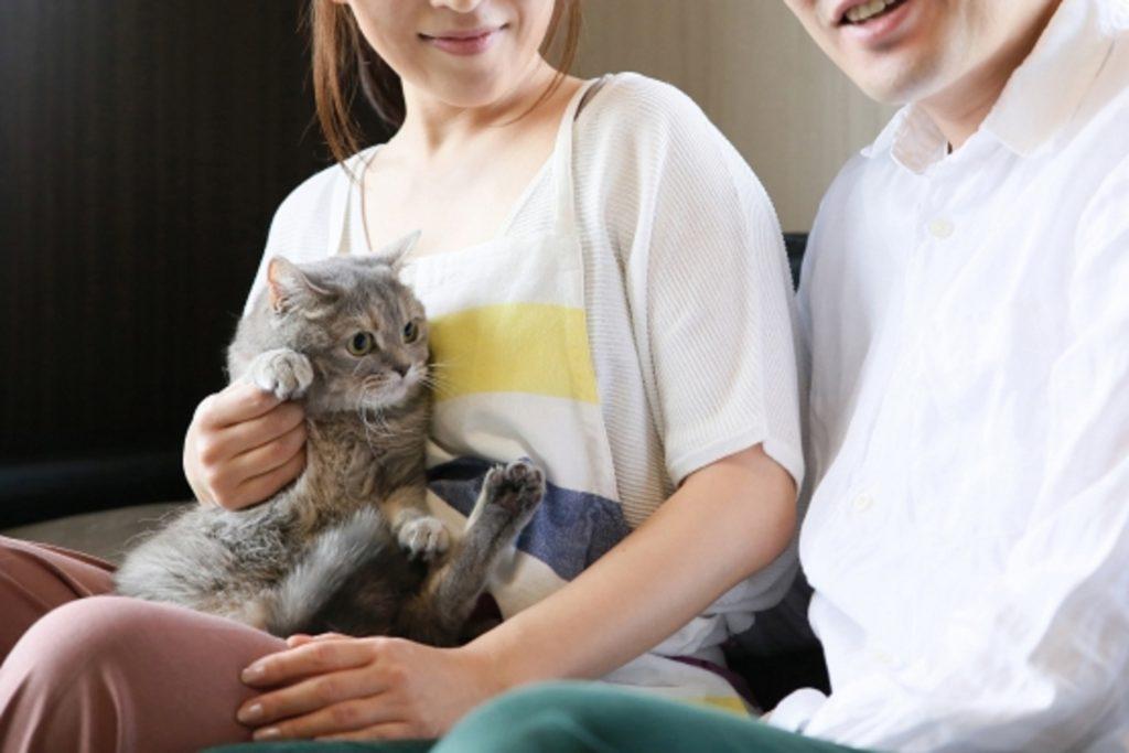 愛猫を大切にする夫婦