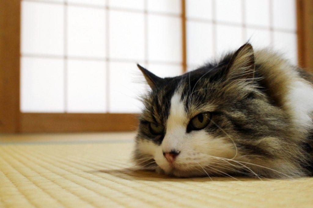 ぐったりした猫