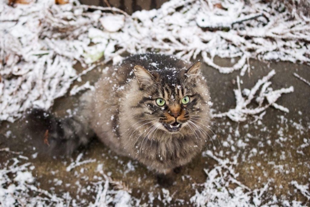 雪の中で凍える猫