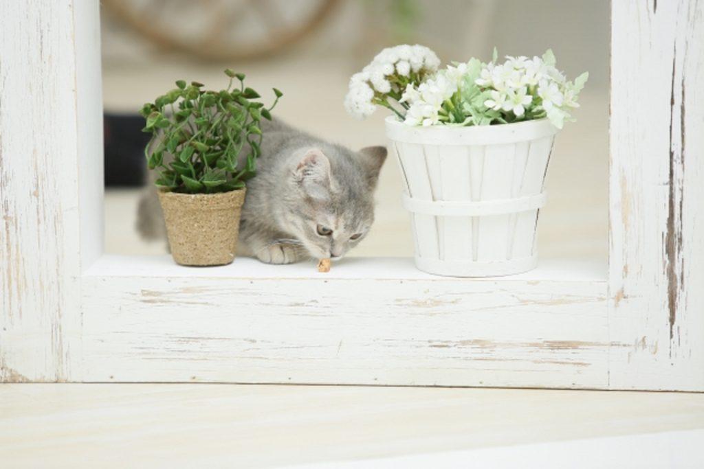 窓際の植物を食べようとする猫