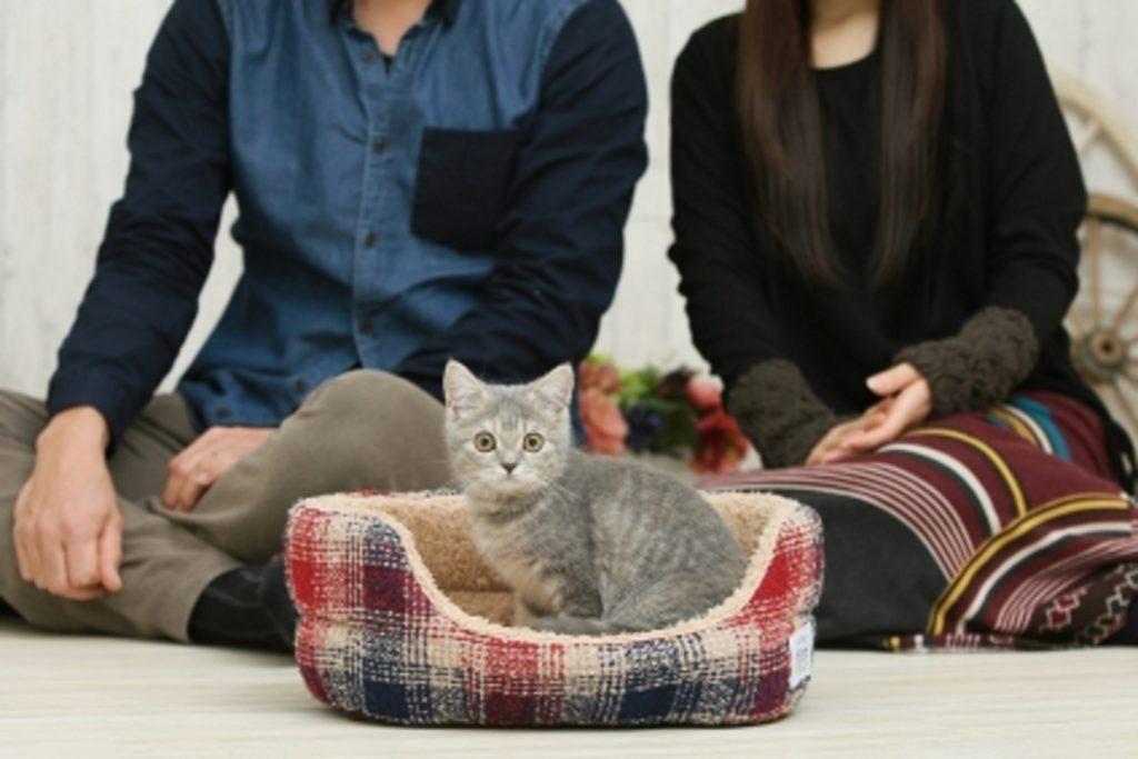 猫と飼い主の夫婦