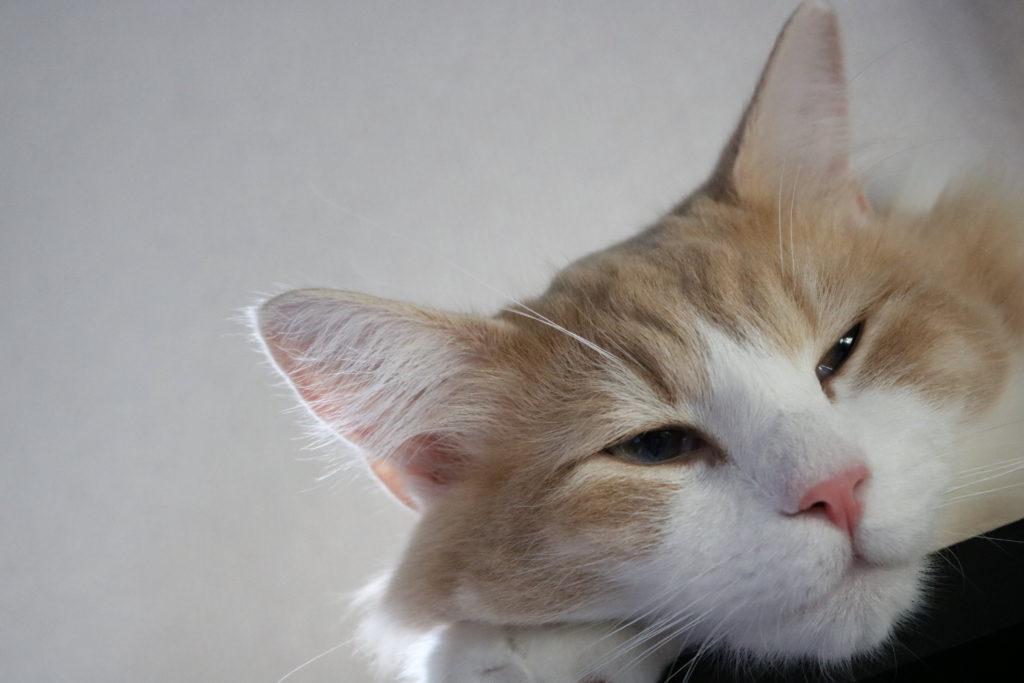 半開きの猫の目