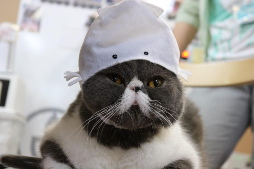 イカの帽子をかぶった姿