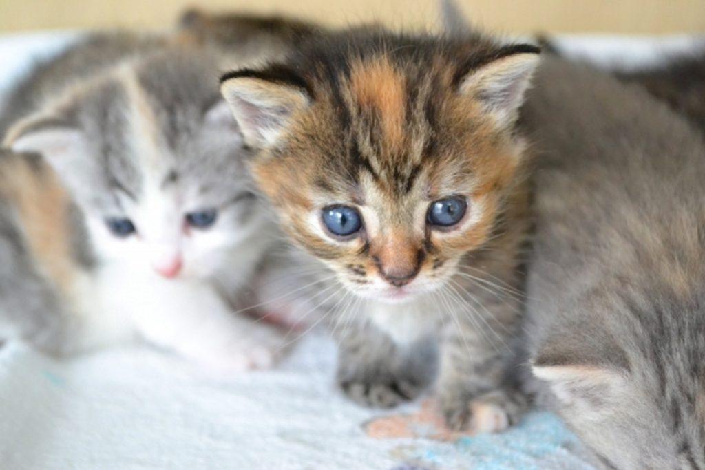 ベッドの上にいる子猫たち