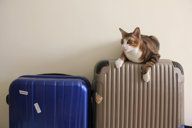 キャリーバックに乗る猫