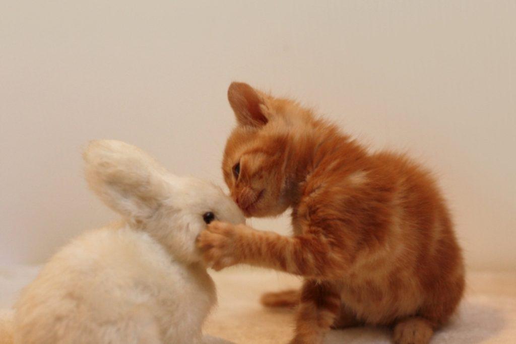 ぬいぐるみにキスする子猫