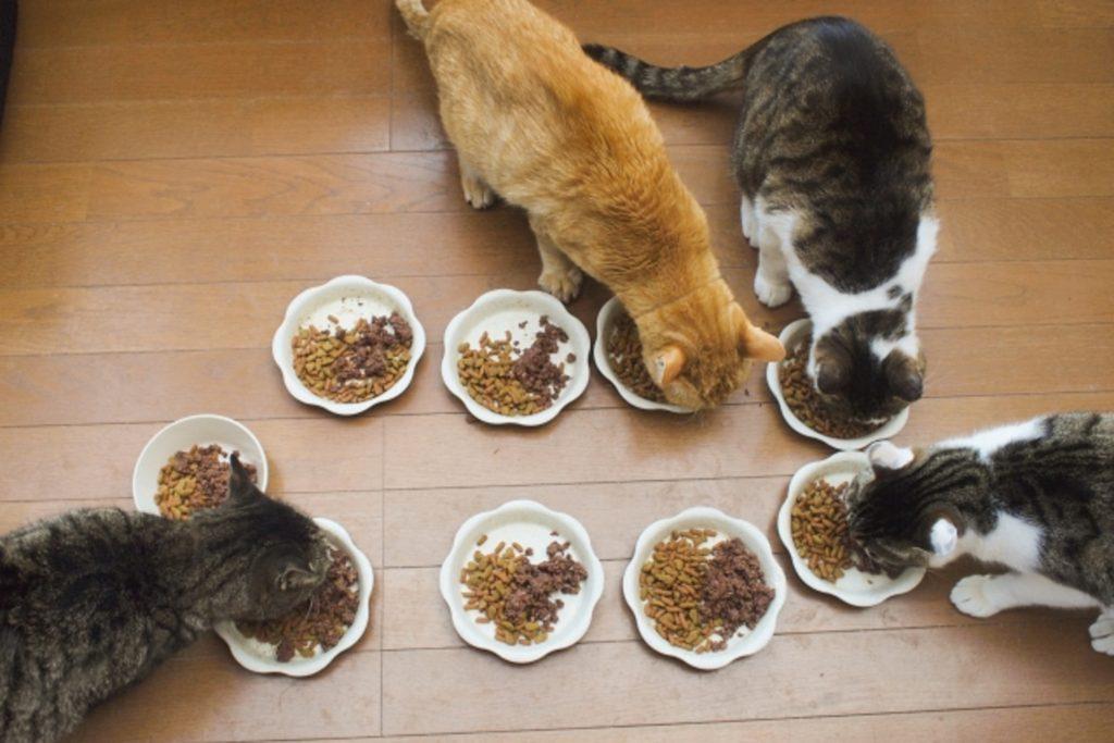 みんな揃ってキャットフードを食べる猫