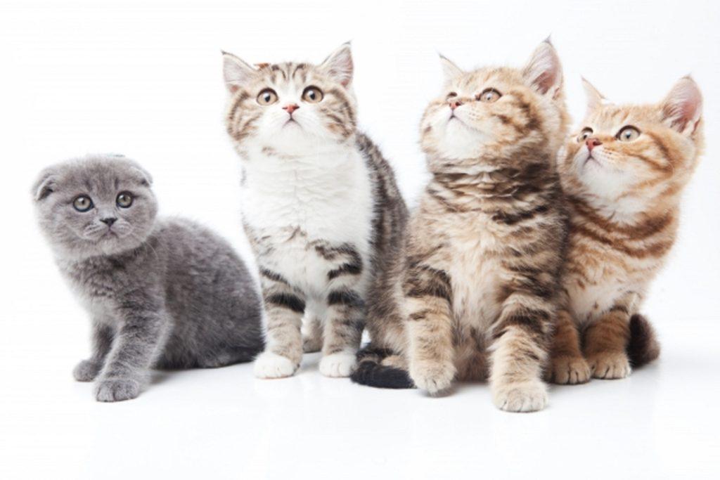 4匹の可愛い子猫