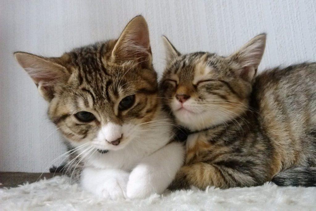 親猫に寄り添う子猫
