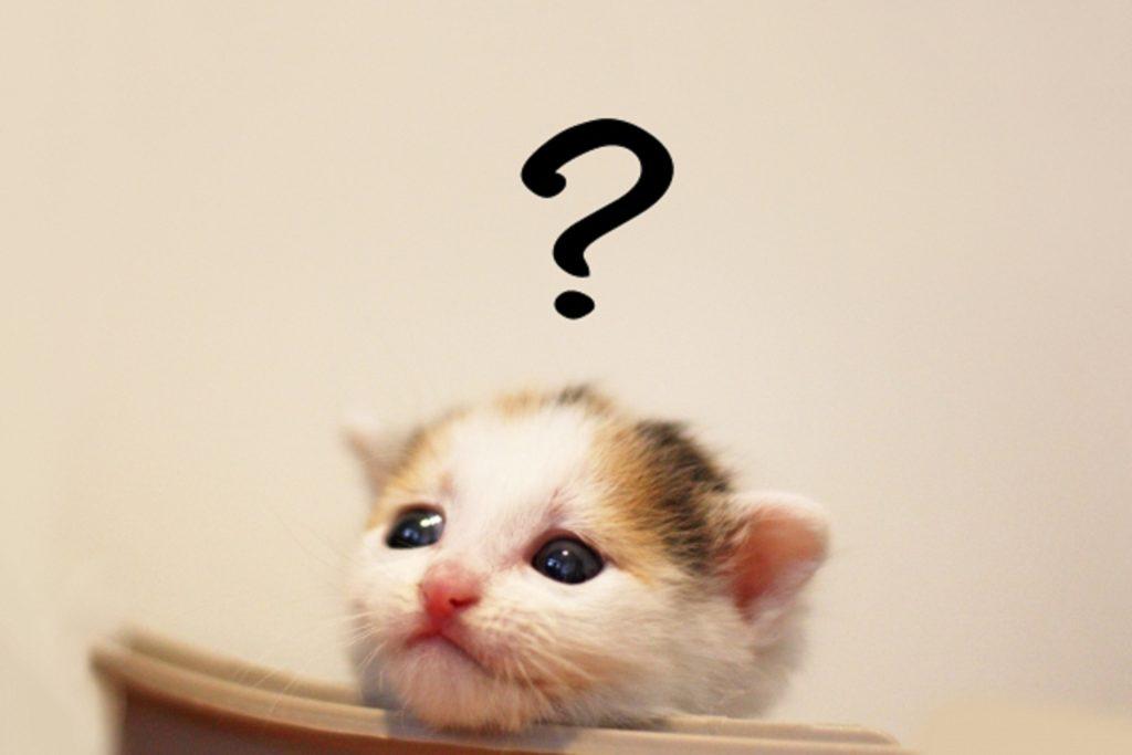 疑問符を浮かべる可愛い子猫
