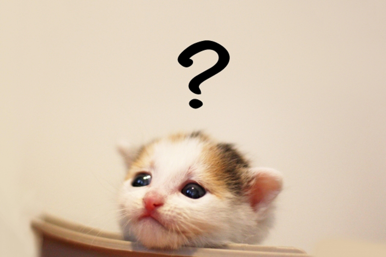 子猫とクエスチョンマーク