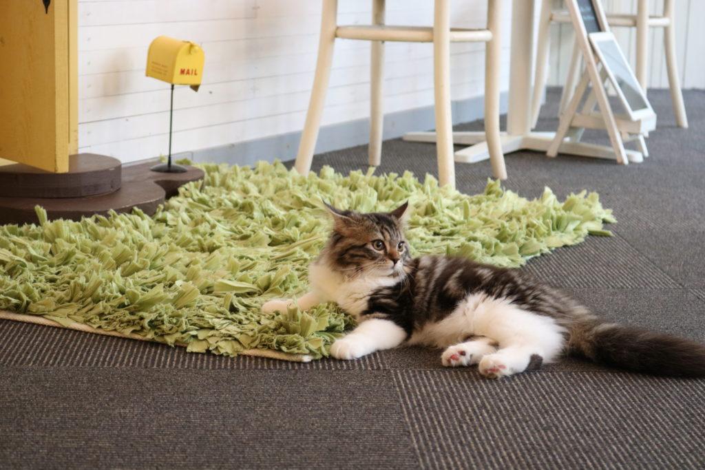 広い部屋に座るご機嫌な猫