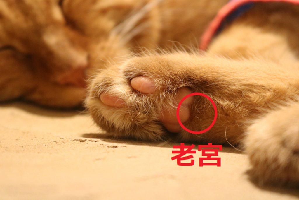 猫のツボの位置