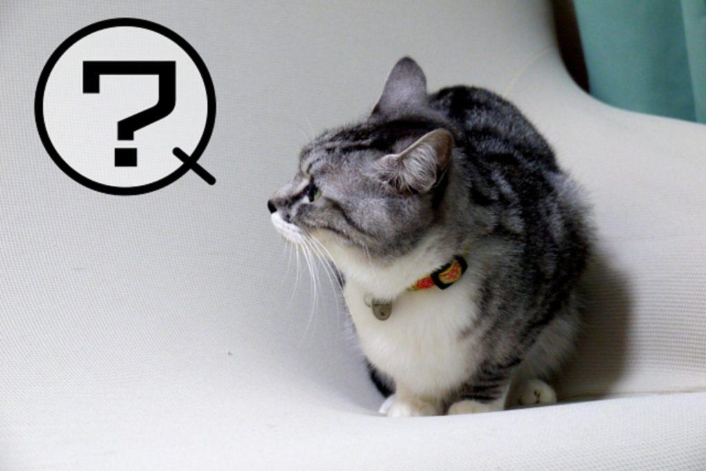 ハテナを浮かべた猫