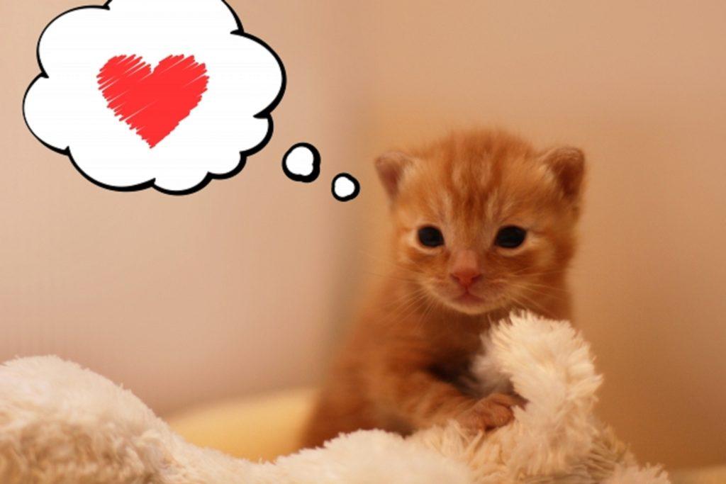 毛布を握りしめる子猫