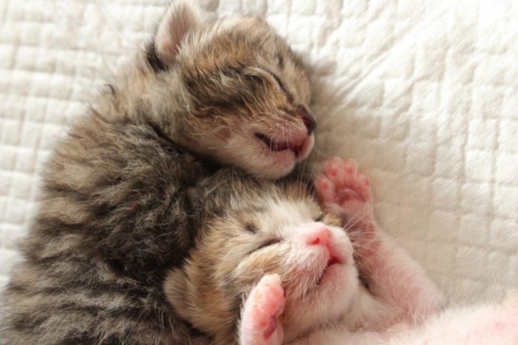 寄り添いながら寝る2匹の子猫