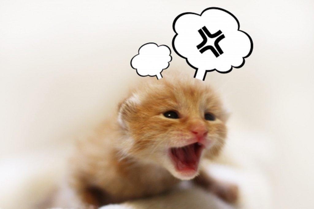 興奮して叫んでいる子猫