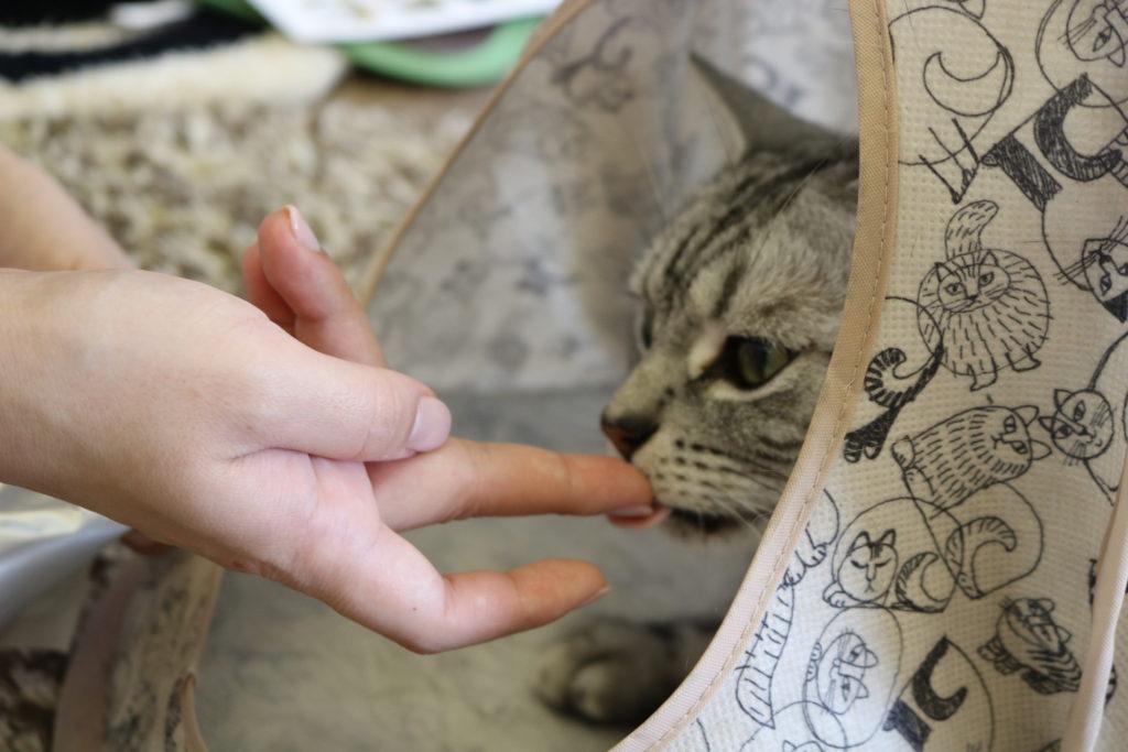 飼い主の指を舐める猫