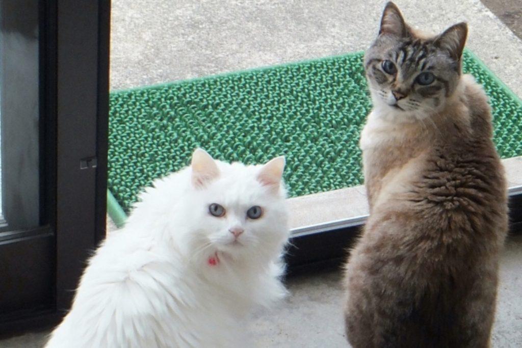 玄関から逃げようとする2匹の猫