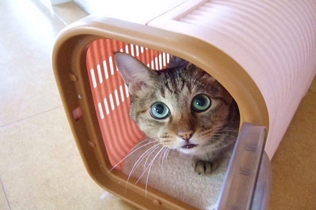 ケージから出てこない子猫