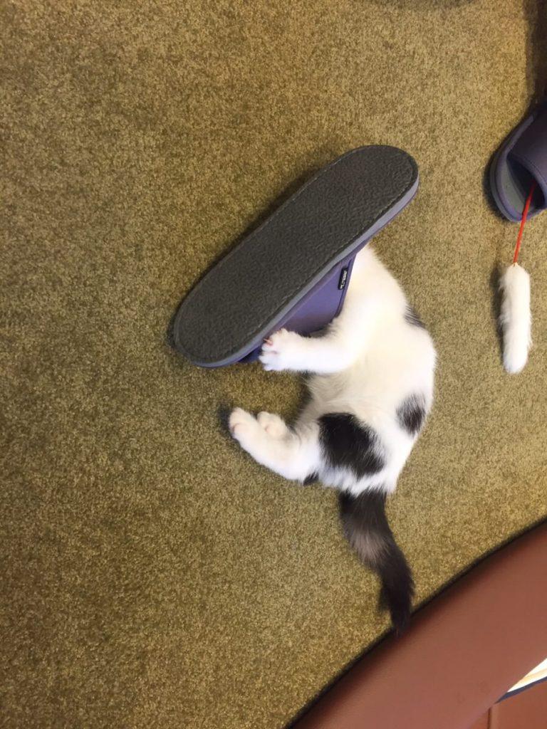 スリッパに頭をうずめた子猫