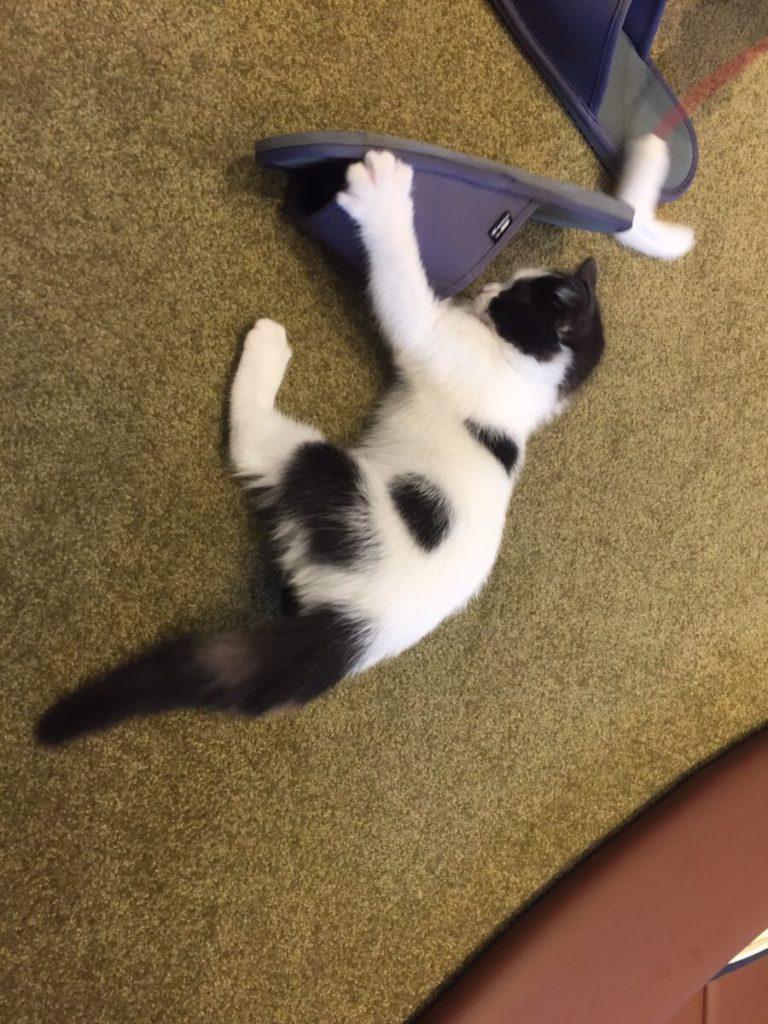 スリッパに夢中な子猫