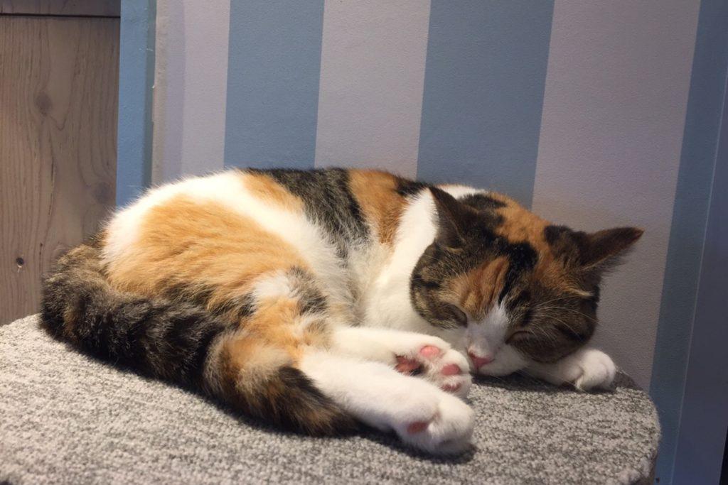 爆睡中の三毛猫