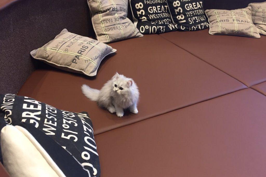店内中央にあるソファー部分に座っている子猫