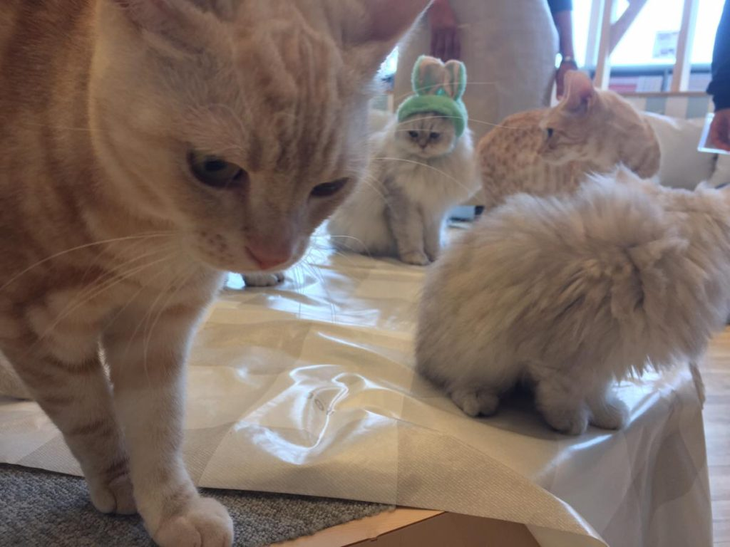 猫アイスを食べた猫