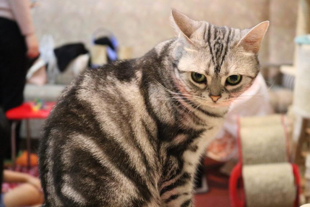 カメラ目線で背中を丸める猫