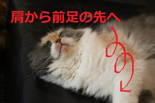 猫の肩を揉むイメージ