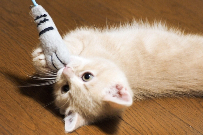 猫じゃらしに反応する猫