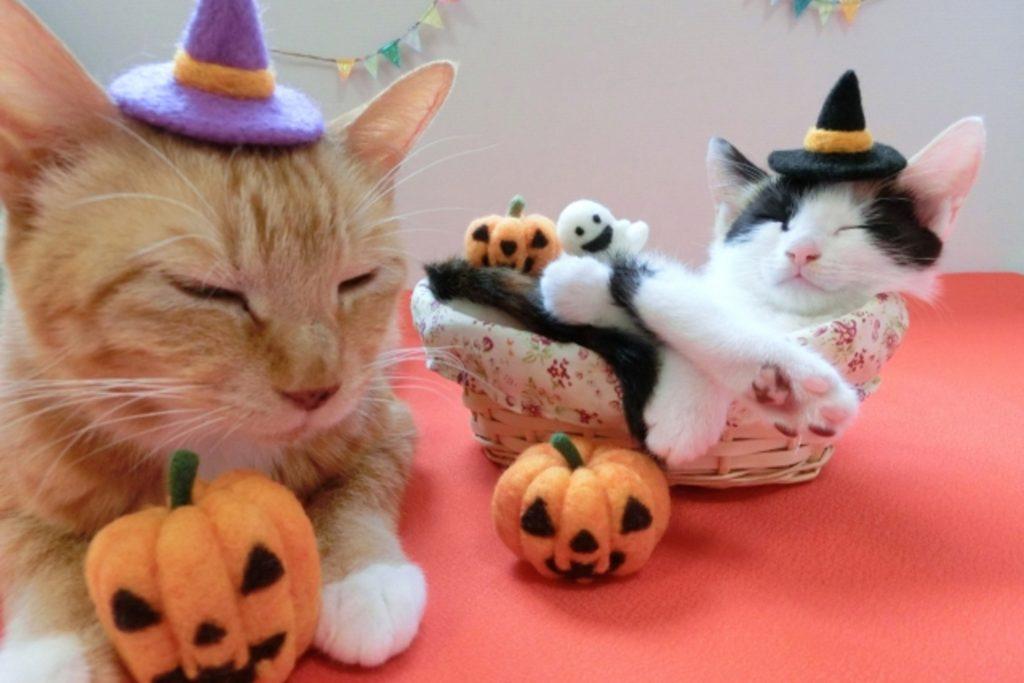 猫とハローウィーン