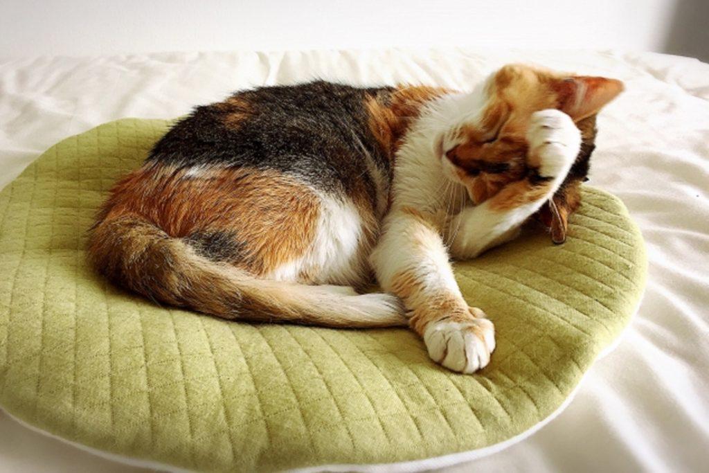 顔をこする猫