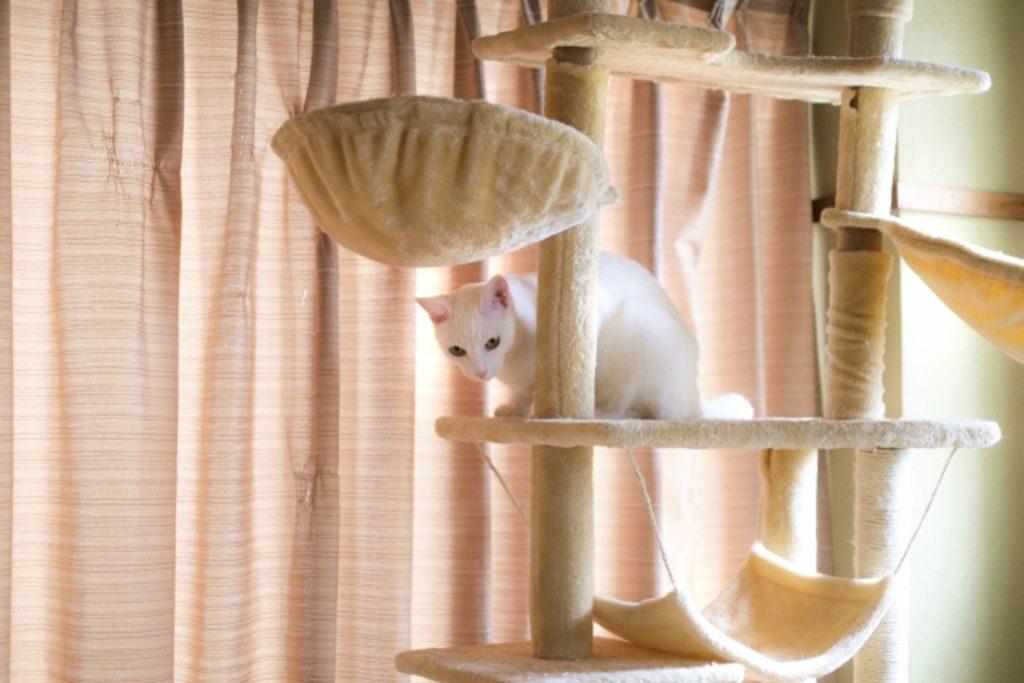 高機能のキャットタワーと猫