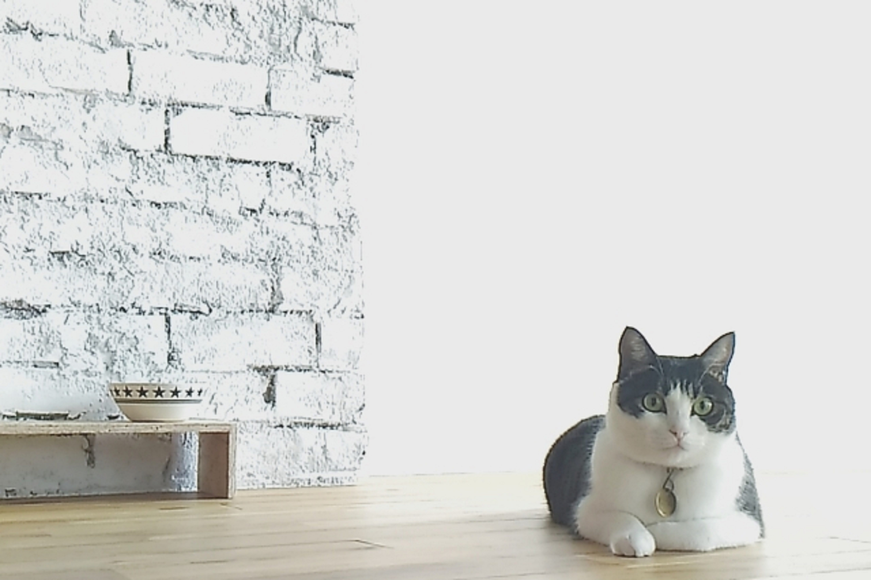 リビングに座る猫