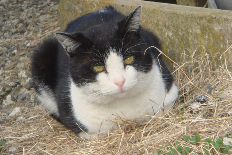 座った姿が四角に見える猫